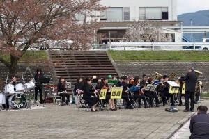 八木桜201501