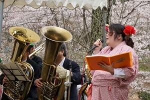大野桜201502